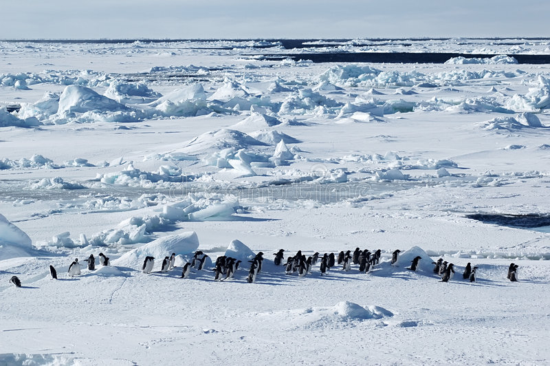 Antarctic penguin march royalty free stock photos