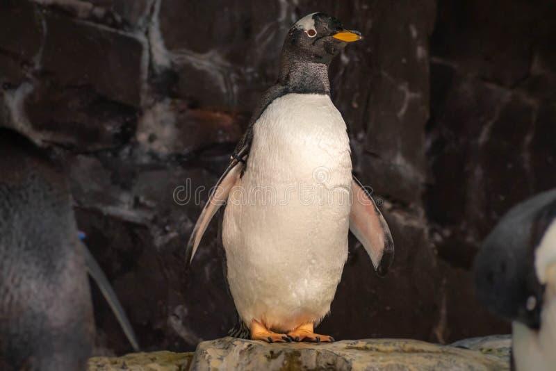 Antarctica Empire of the Penguin at Seaworld 36. Orlando, Florida. June 17, 2019. Antarctica Empire of the Penguin at Seaworld 36 stock photos