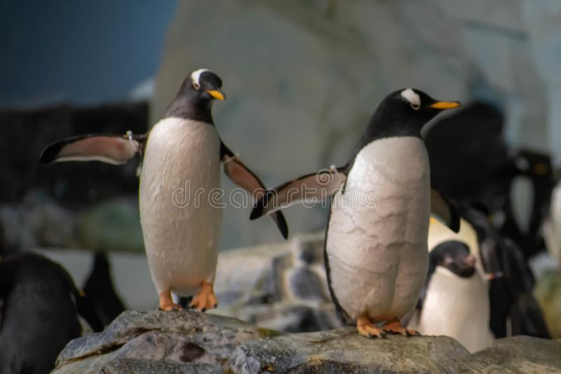Antarctica Empire of the Penguin at Seaworld 43. Orlando, Florida. June 17, 2019. Antarctica Empire of the Penguin at Seaworld 43 stock images