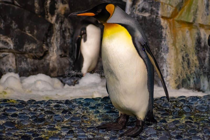 Antarctica Empire of the Penguin at Seaworld 51. Orlando, Florida. June 17, 2019. Antarctica Empire of the Penguin at Seaworld 51 stock photography