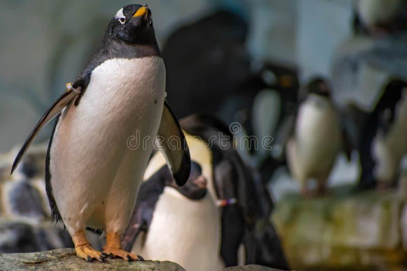 Antarctica Empire of the Penguin at Seaworld 41. Orlando, Florida. June 17, 2019. Antarctica Empire of the Penguin at Seaworld 41 stock image