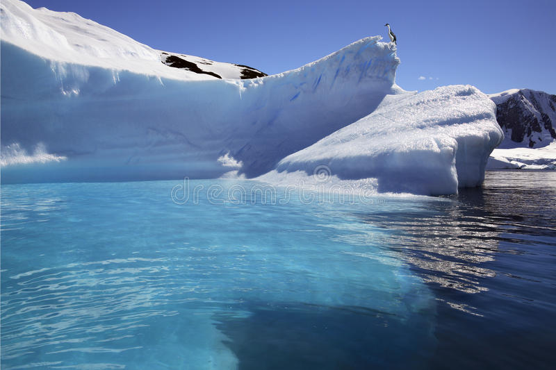 Download Antarctica - Iceberg In Cuverville Bay Stock Photo - Image of sightseeing, shag: 19036602