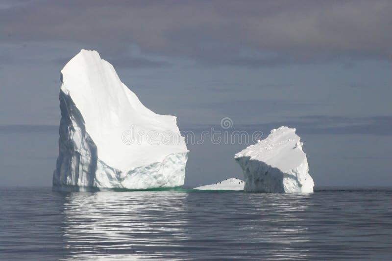 Antarctica icebergs stock image
