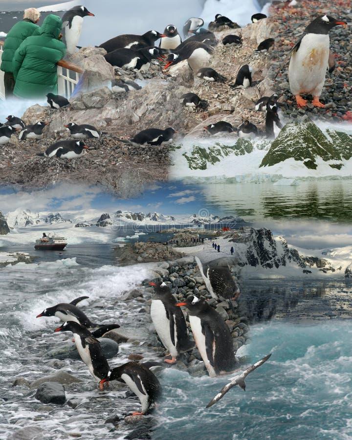 antarctica montaż obrazy royalty free