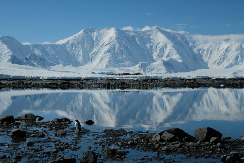 Antarctica pingwin w lustrzanej błękit zatoce pod białym śniegiem nakrywał góry zdjęcia royalty free