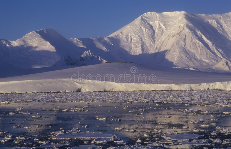 Antarctica Shore Stock Images
