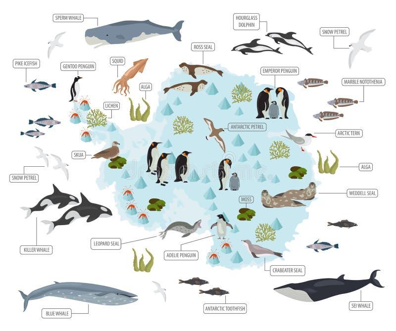 Antarktis, die Antarktis, die Flora und die Fauna zeichnen, flache Elemente auf Anim lizenzfreie abbildung