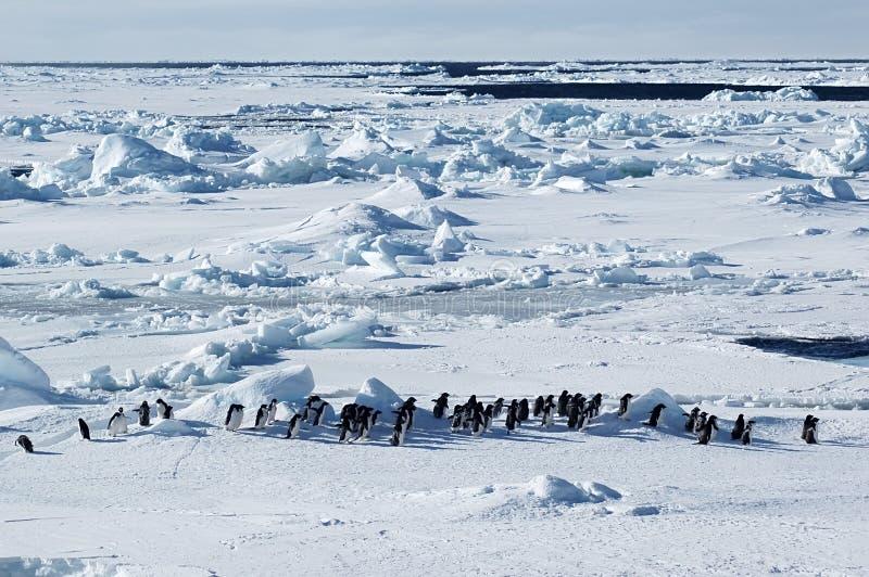Antarktischer Pinguinmarsch lizenzfreie stockfotos