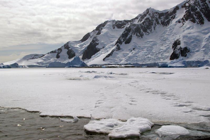 Antarktisches Seeeis lizenzfreie stockfotos