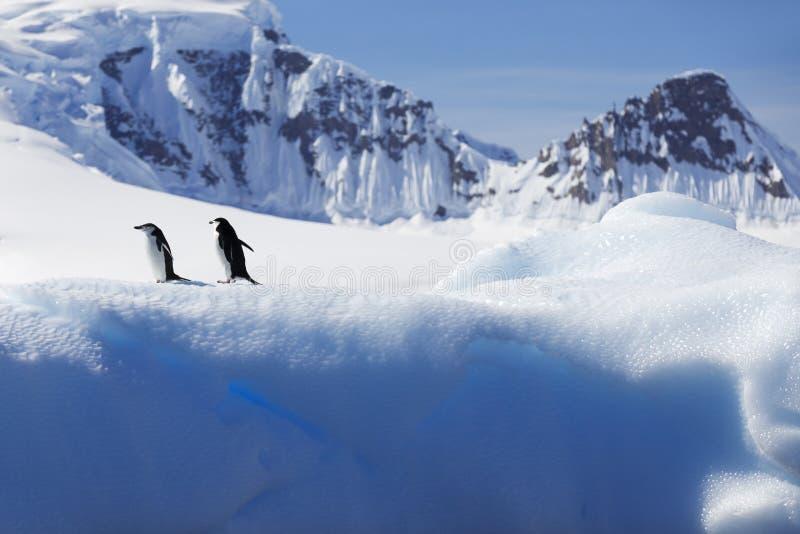 Antarktisk kust arkivfoto