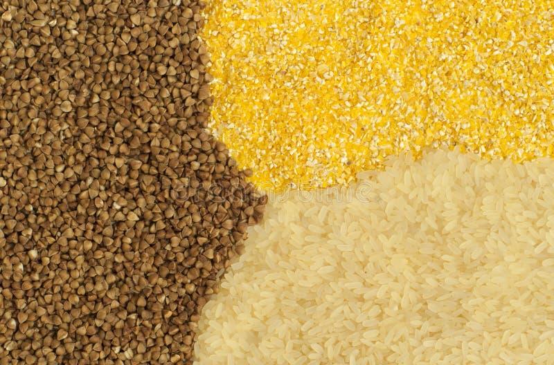 Antecedentes: alforfón, maíz y arroz fotografía de archivo