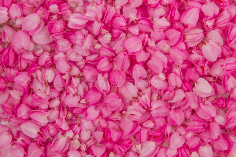 Antecedentes completos de la flor rosada imagenes de archivo