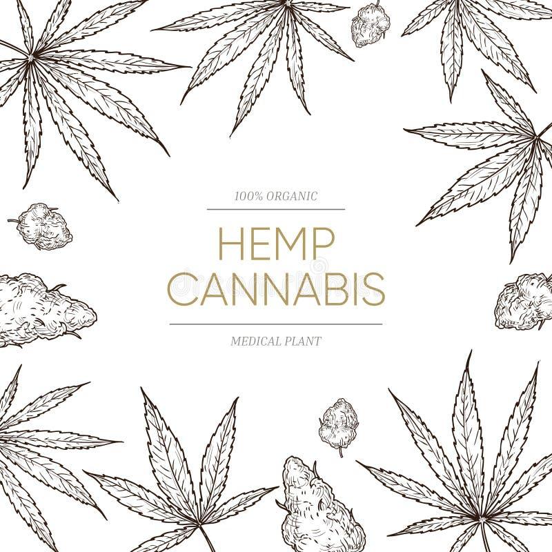Antecedentes de cannabis Maconha médica e conceito de sementes para banner de óleo cbd Vetor ganja desenhado à mão ilustração do vetor