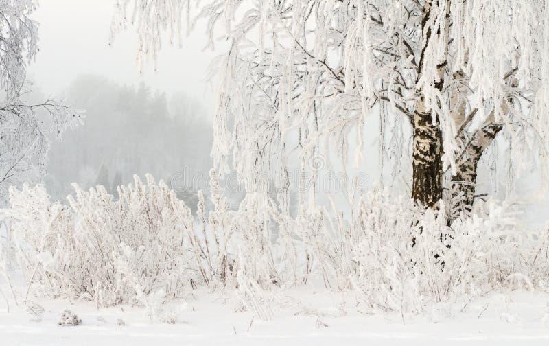Antecedentes de la naturaleza del invierno Escarcha en ramas de árboles Tiempo nevoso frío Invierno escarchado Plantas Nevado imágenes de archivo libres de regalías