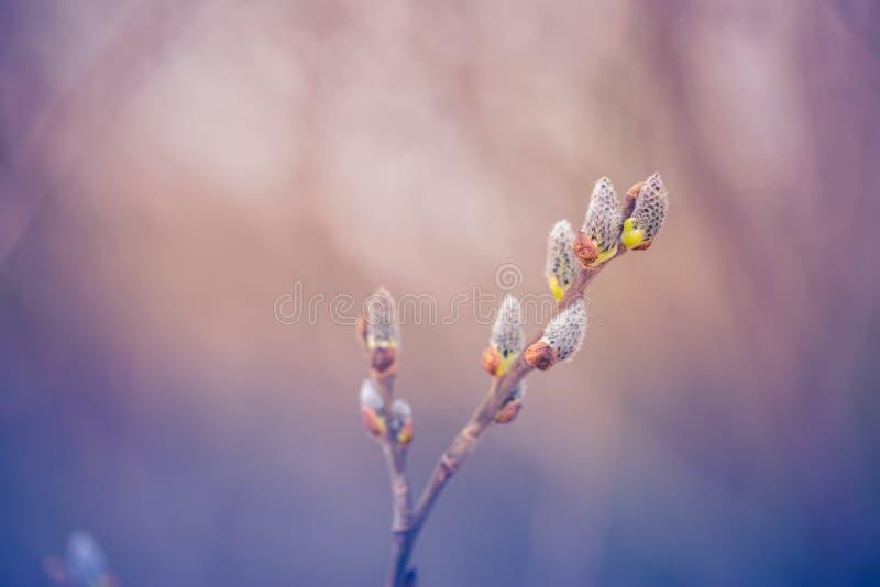Antecedentes de la naturaleza del invierno Luz del sol suave y nieve fría del detalle del hielo y blanca Fondo perfecto del invie imagen de archivo libre de regalías
