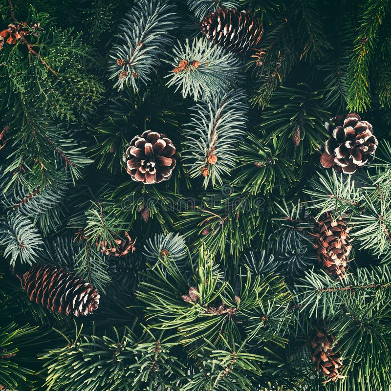 Antecedentes de natal, ramos de árvores de Natal, spruts, juniper, abeto, larch, pine cones Tema Natal e Ano Novo Largura plana,  fotografia de stock