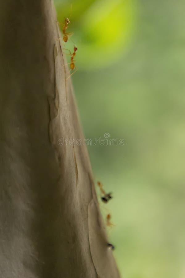 Anteckningar arbetar mycket hårt Caring leafs att gå på trädet i skogen royaltyfria bilder