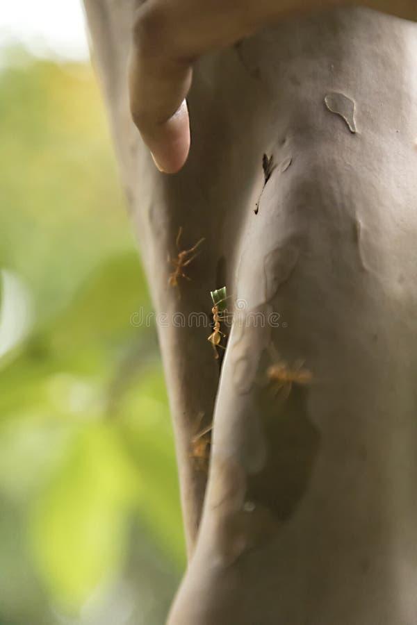 Anteckningar arbetar mycket hårt Caring leafs att gå på trädet i skogen arkivfoton