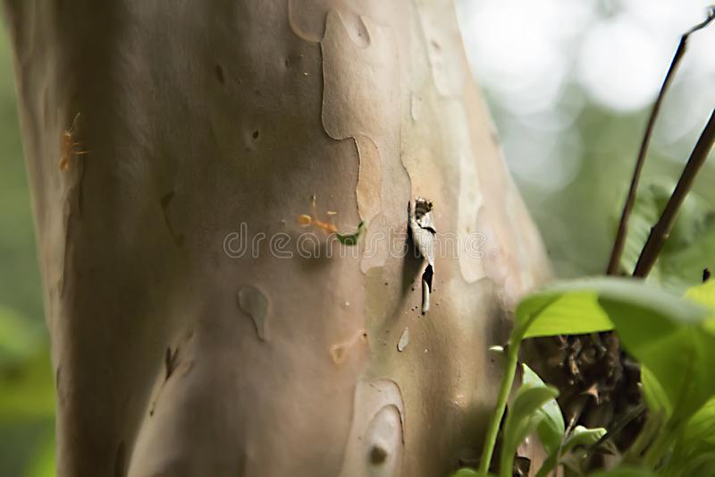 Anteckningar arbetar mycket hårt Caring leafs att gå på trädet i skogen fotografering för bildbyråer