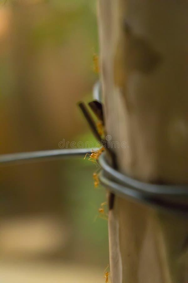 Anteckningar arbetar mycket hårt Caring leafs att gå på trädet i skogen, royaltyfri fotografi
