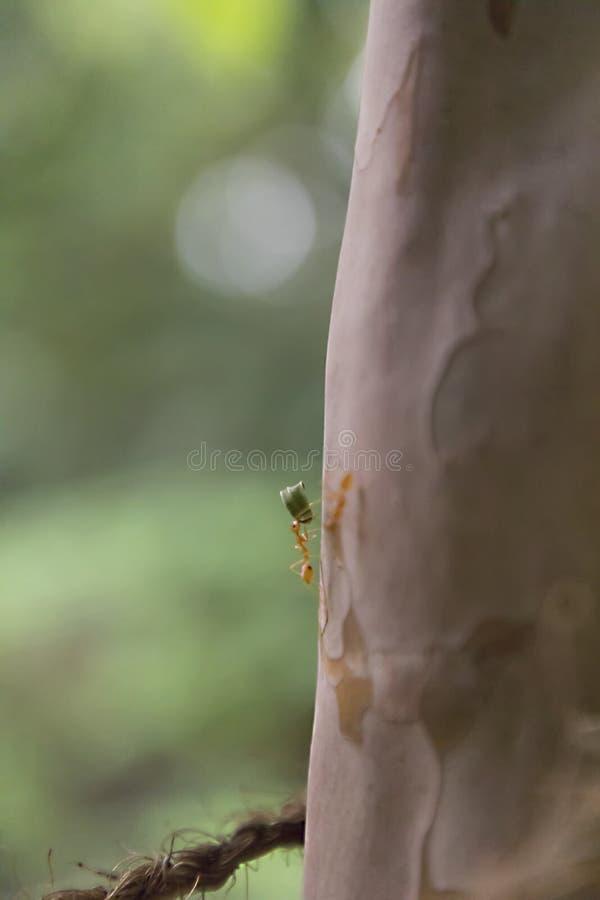 Anteckningar arbetar mycket hårt Caring leafs att gå på trädet i skogen, arkivfoto