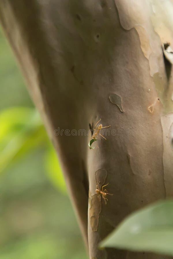 Anteckningar arbetar mycket hårt Caring leafs att gå på trädet i skogen, fotografering för bildbyråer