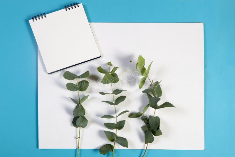 anteckningsbok på vårarna med en eukalyptus på en blå bakgrund med ett tomt utrymme för anmärkningar royaltyfri bild