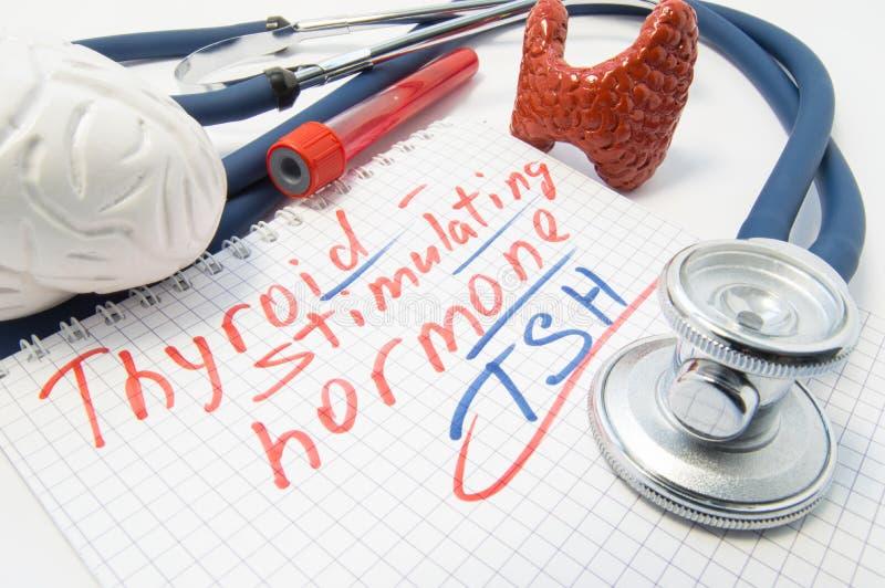 Anteckningsbok som inskrivas med stimulerande hormonlögner för sköldkörtel som omges av stetoskopet, hjärnsköldkörtel, blodprovrö arkivbild