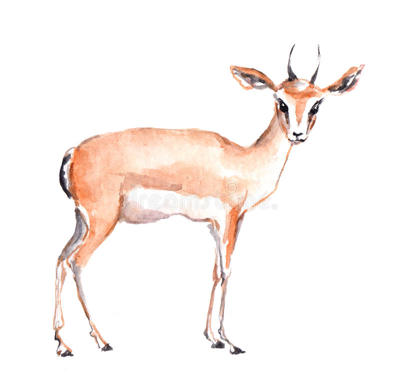 Antelope Animal. Watercolor Stock Illustration