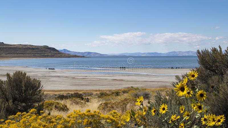 Antelope Island Beach stock photography
