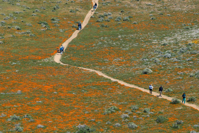 Antelope Valley California Poppy Reserve royalty free stock photo
