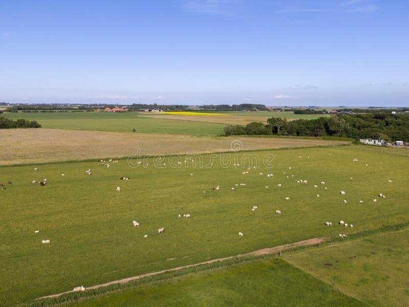 Antena łąka z caklami i kultywująca ziemia na holenderskiej wyspie Texel obraz stock