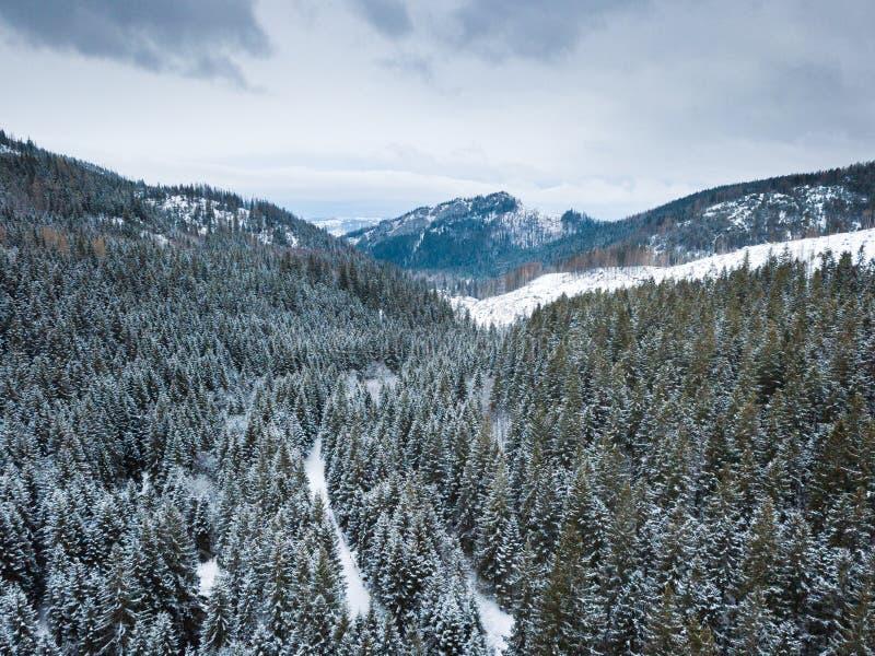 ANTENA: Bosque del invierno foto de archivo libre de regalías