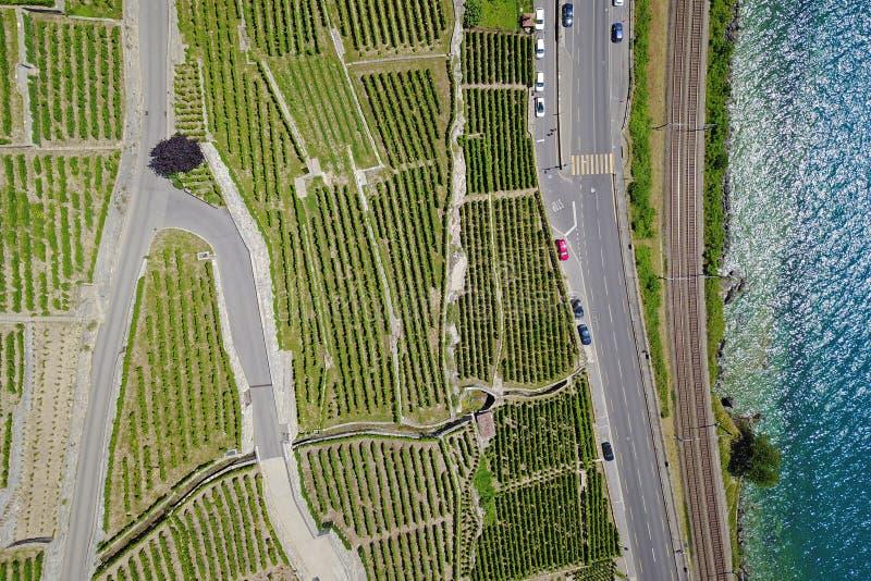 Antena dos vinhedos pelo lago, Lavaux, Suíça imagens de stock