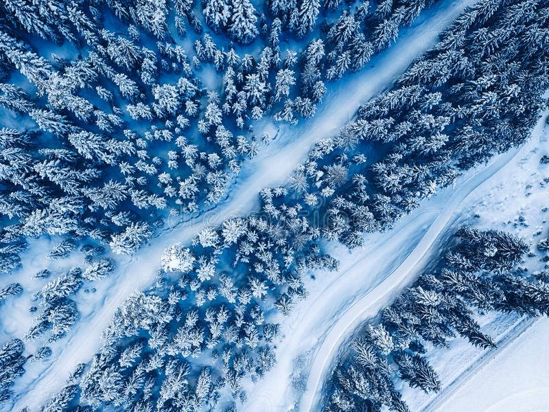antena Drzewa i śnieg w zimy natury lasowego tła odgórnym widoku fotografia royalty free