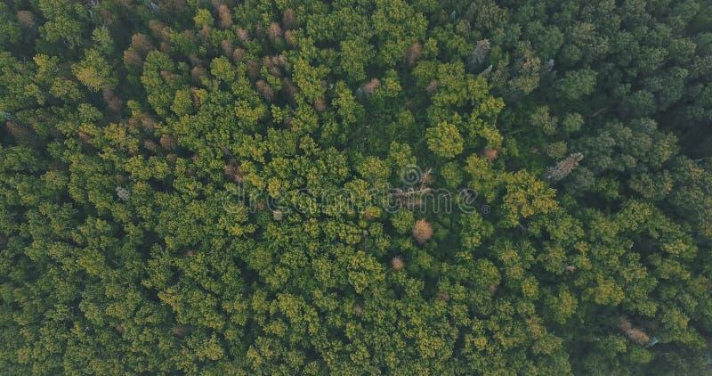 Antena nas partes superiores da árvore imagens de stock