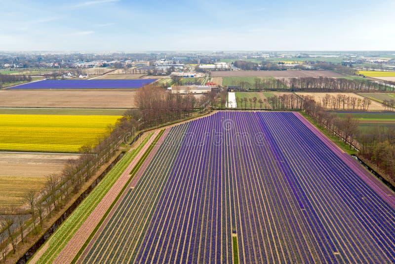 Antena od tulipanów poly w wsi od holandii fotografia stock