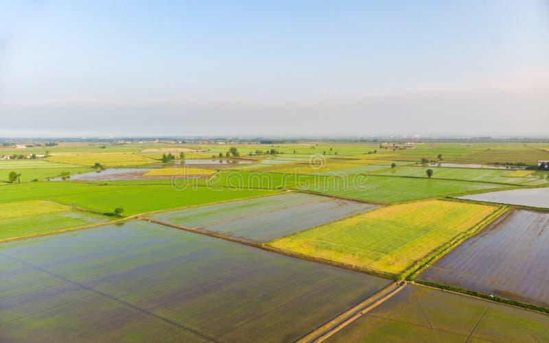 Antena: ryżowi irlandczycy, zalewająca kultywująca pole ziemi uprawnej wiejska włoska wieś, rolnictwa zajęcie, sprintime w Podgór zdjęcie stock
