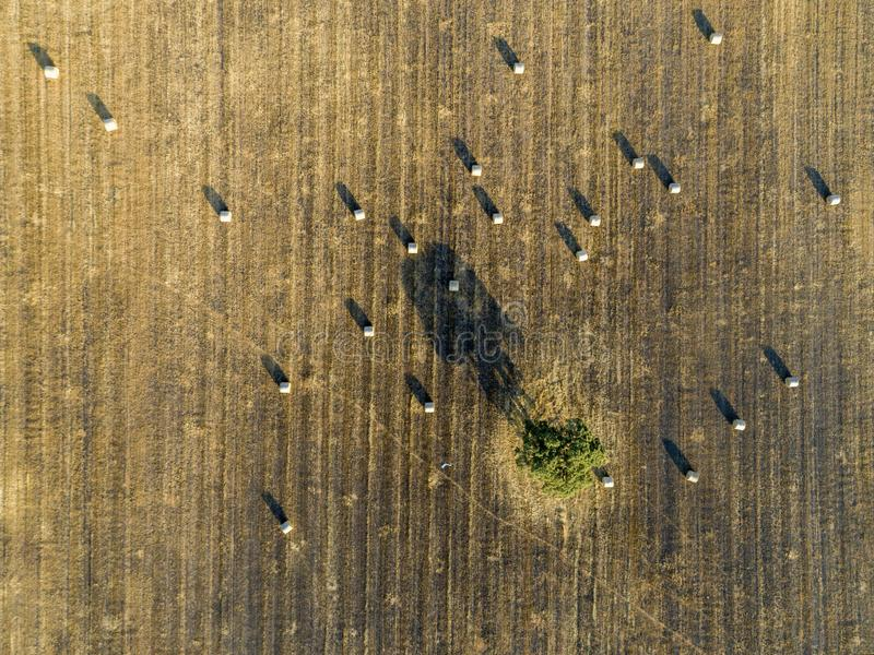 Antena staczająca się siano ziemia uprawna odpowiada wieś krajobraz w Alentejo, Portugalia zdjęcia royalty free