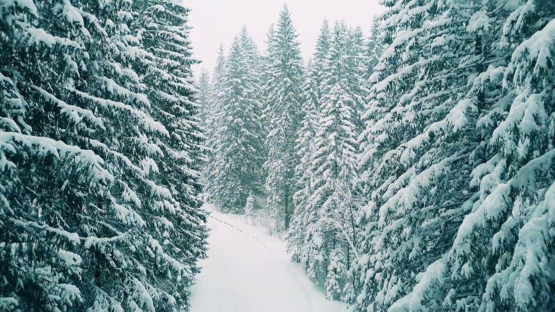 Antena strzelał las w ciężkim śniegu obraz stock
