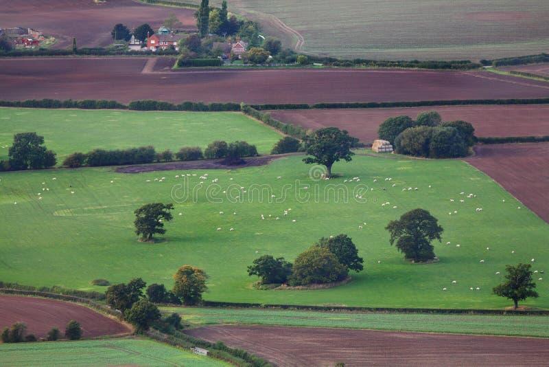 Antena uprawia ziemię pola i bydlęcia obrazy stock