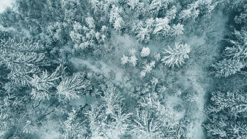Antena wierzchołka puszka widok śnieżny las w zimie obraz royalty free