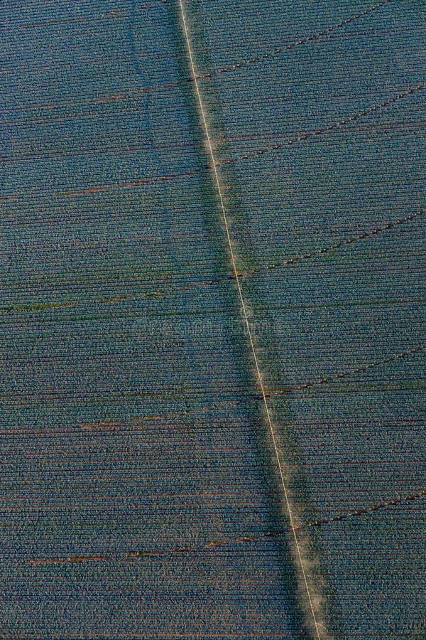 Antenn av jordbruks- fält under bevattning av länderna arkivfoto