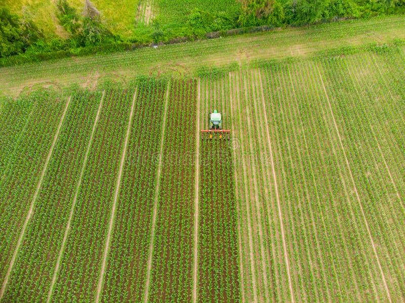 Antenn: traktor som ner arbetar på kultiverad fältjordbruksmark, åkerbruk ockupation, sikt för överkant av frodiga gröna sädes- s royaltyfria foton