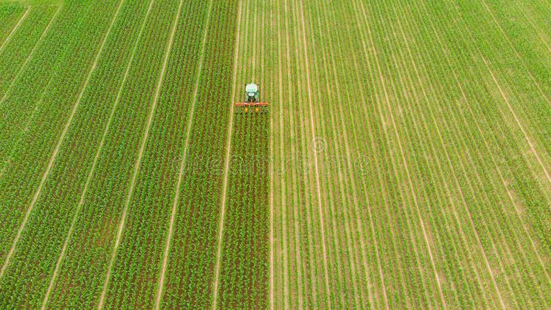 Antenn: traktor som ner arbetar på kultiverad fältjordbruksmark, åkerbruk ockupation, sikt för överkant av frodiga gröna sädes- s royaltyfria bilder