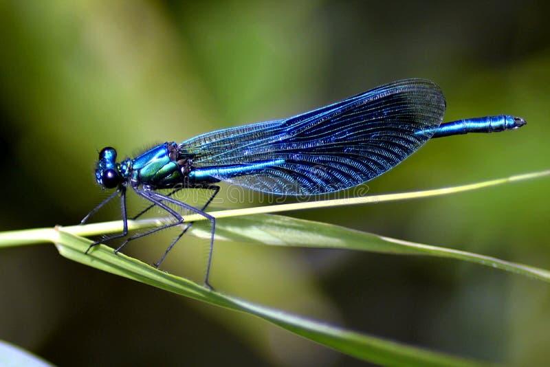 Antenna, Biology, Blue stock image