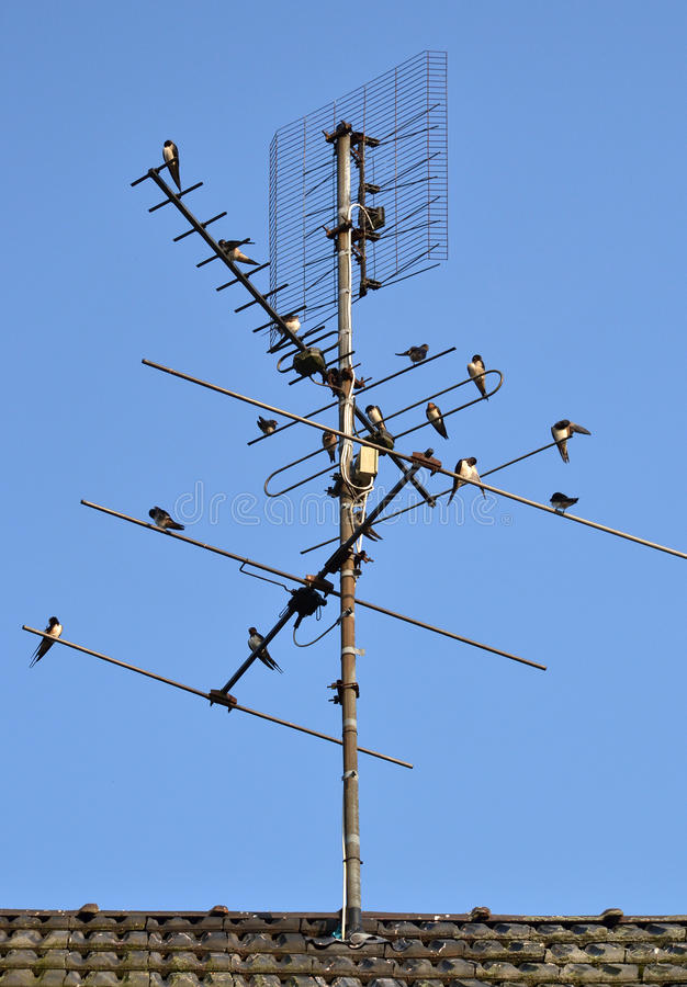 Antenna della TV con gli swallows del coltivatore. fotografie stock libere da diritti