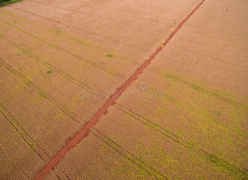 Antenne de plantation de soja image libre de droits