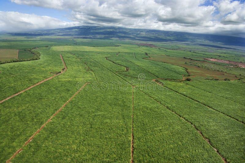 Antenne van geïrrigeerd cropland. stock afbeelding