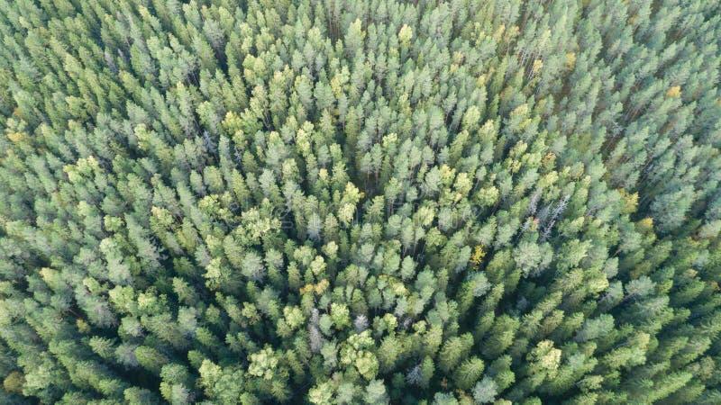 Antenne van groen boslandschap wordt geschoten dat stock foto